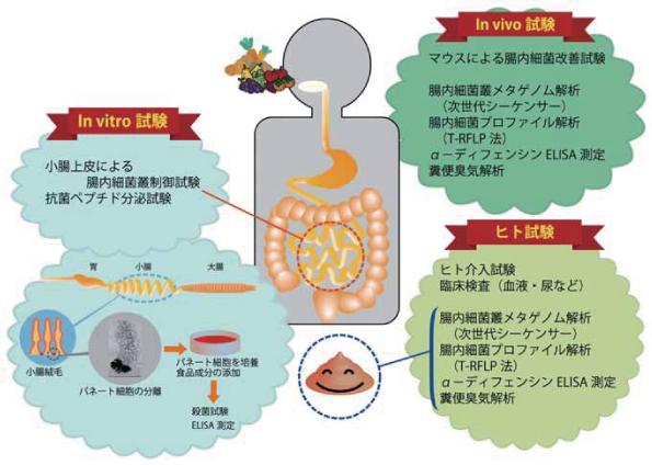 腸 内 環境 改善